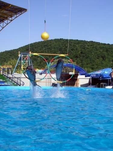 дельфинарий Архипо осиповка Курортный поселок  Архипо Осиповка еще один райский уголок.....