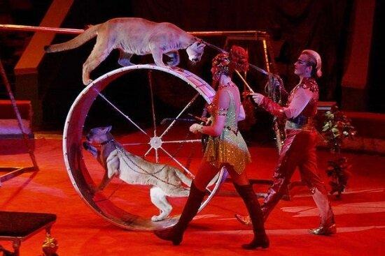 выступление Запашных Сочинский цирк