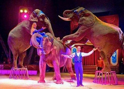 выступление животных Сочинский цирк