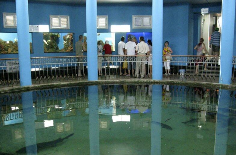 крым севастополь аквариум Экскурсии