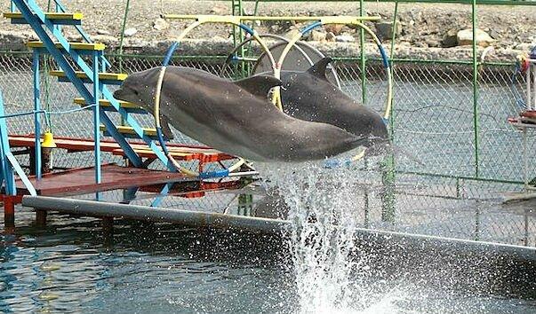 большой утриш дельфинарий Курортные поселки Анапы